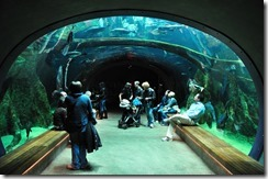 academy-of-sciences-aquarium